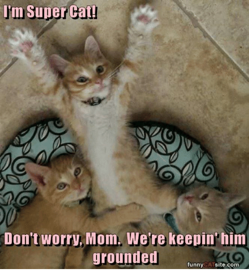 funny cat: Im Super Cat!  Don't worry, Mom. We're keepin'him  grounded  funny  CAT  site.com
