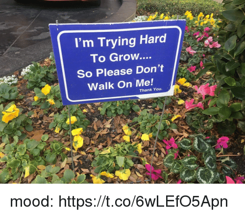 Mood, Thank You, and Girl Memes: I'm Trying Hard  To Grow....  So Please Don't  Walk On Me!  Thank You. mood: https://t.co/6wLEfO5Apn