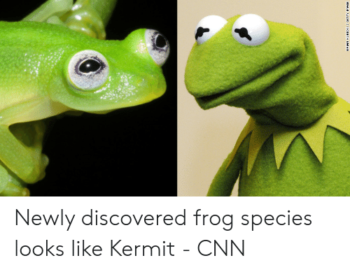 Frog Species: IMAGE Newly discovered frog species looks like Kermit - CNN