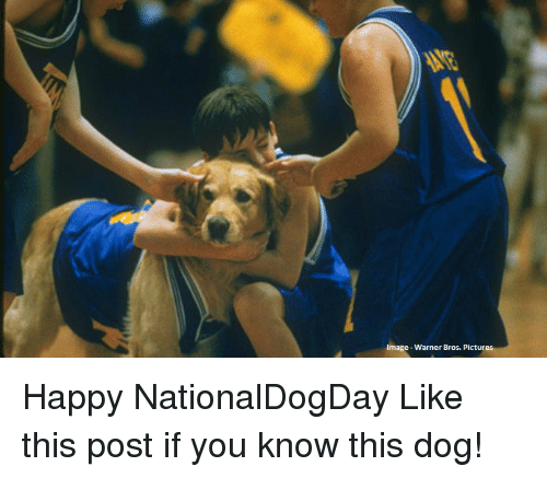 warner bros pictures: Image-Warner Bros. Pictur Happy NationalDogDay Like this post if you know this dog!
