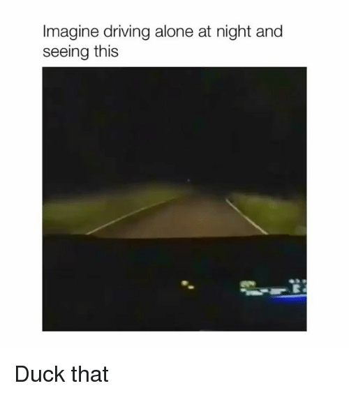 Being Alone, Driving, and Duck: Imagine driving alone at night and  seeing this Duck that