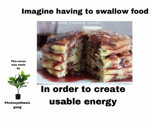 Ameme: Imagine having to swallow food  G: ameme crunchwrap supreme  This meme  was made  by  In order to create  Photoyntheslsusable energ)y  gang