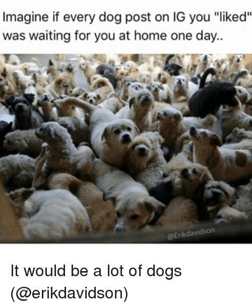 """Dogs, Funny, and Home: Imagine if every dog post on IG you """"liked""""  was waiting for you at home one day..  @Erikdavidson It would be a lot of dogs (@erikdavidson)"""