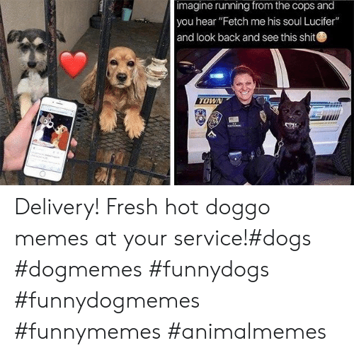 """Doggo Memes: imagine running from the cops and  you hear """"Fetch me his soul Lucifer""""  and look back and see this shit  TOWN Delivery! Fresh hot doggo memes at your service!#dogs #dogmemes #funnydogs #funnydogmemes #funnymemes #animalmemes"""