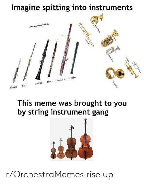 euphonium: Imagine spitting into instruments  woodwind instruments  bassoon recorder  oboe  clarinet  flute  piccolo  This meme was brought to you  by string instrument gang  Cornet  Tubor  Trumpet  French Herm  Euphonium  Trombene  Suszaphone r/OrchestraMemes rise up