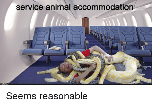 Reasonable Accommodation Service Dog