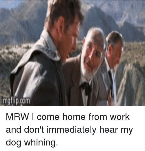 Dog Whining When I Come Home