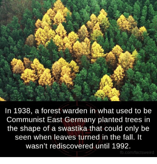 Fall, Memes, and fb.com: In 1938, a forest warden in what used to be  Communist East Germany planted trees in  the shape of a swastika that could only be  seen when leaves turned in the fall. It  wasn't rediscovered until 1992.  fb.com/factsweird