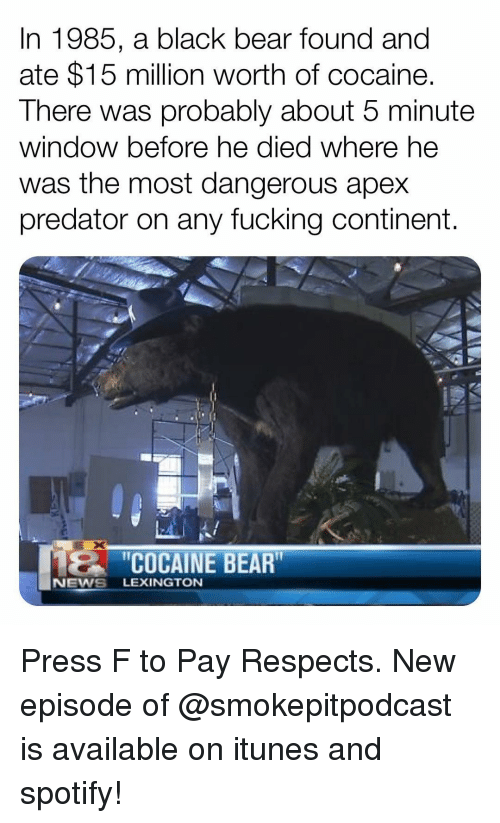 "new episode: In 1985, a black bear found and  ate $15 million worth of cocaine.  There was probably about 5 minute  window before he died where he  was the most dangerous apex  predator on any fucking continent.  2C  ""COCAINE BEAR  NEWS LEXINGTON Press F to Pay Respects. New episode of @smokepitpodcast is available on itunes and spotify!"