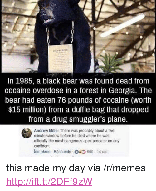 """Memes, Apex, and Bear: In 1985, a black bear was found dead from  cocaine overdose in a forest in Georgia. The  bear had eaten 76 pounds of cocaine (worth  $15 million) from a duffle bag that dropped  from a drug smuggler's plane.  Andrew Miller There was probably about a five  minute window before he died where he was  officially the most dangerous apex predator on any  continent  imi place Răspunde 660-14 ore <p>this made my day via /r/memes <a href=""""http://ift.tt/2DFf9zW"""">http://ift.tt/2DFf9zW</a></p>"""