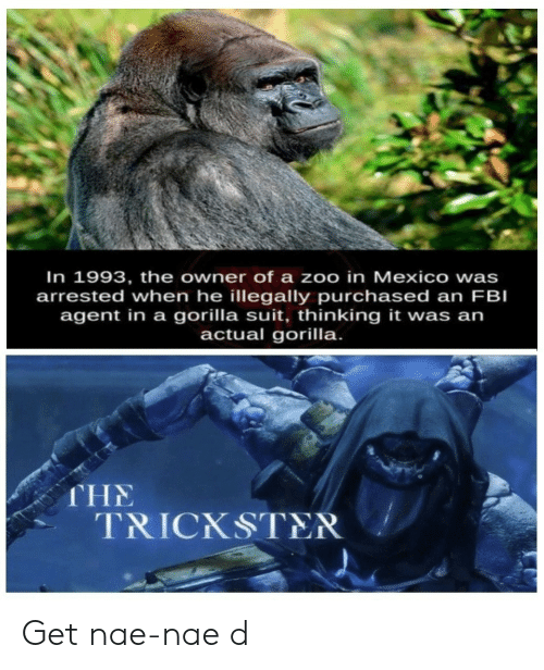 zoo: In 1993, the owner of a zoo in Mexico wa  arrested when he illegally purchased an FBI  agent in a gorilla suit, thinking it was an  actual gorilla.  s  THE  TRICKSTER Get nae-nae d