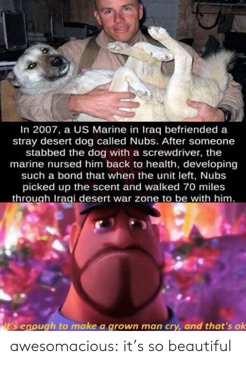 The Unit: In 2007, a US Marine in Iraq befriended a  stray desert dog called Nubs. After someone  stabbed the dog with a screwdriver, the  marine nursed him back to health, developing  such a bond that when the unit left, Nubs  picked up the scent and walked 70 miles  through Iraqi desert war zone to be with him.  it's enough to make a grown man cry, and that's ok awesomacious:  it's so beautiful