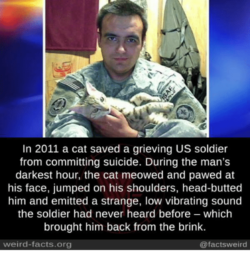 Facts, Head, and Memes: In 2011 a cat saved a grieving US soldier  from committing suicide. During the man's  darkest hour, the cat meowed and pawed at  his face, jumped on his shoulders, head-butted  him and emitted a strange, low vibrating sound  the soldier had never heard before which  brought him back from the brink.  weird-facts.org  @facts weird