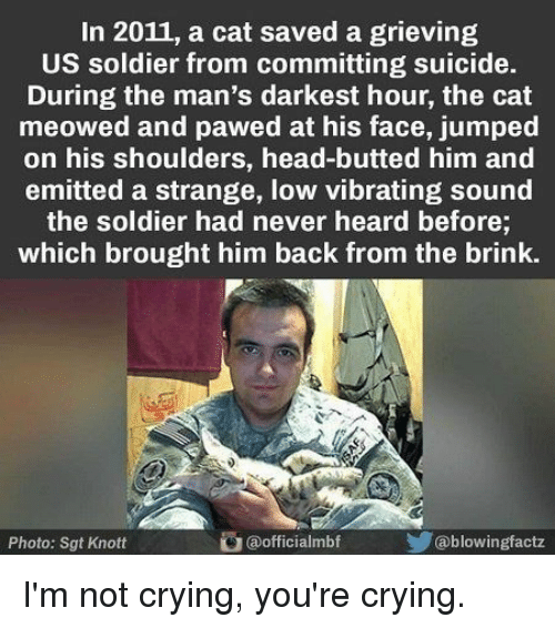Committing Suicide: In 2011, a cat saved a grieving  US soldier from committing suicide.  During the man's darkest hour, the cat  meowed and pawed at his face, jumped  on his shoulders, head-butted him and  emitted a strange, low vibrating sound  the soldier had never heard before;  which brought him back from the brink.  Photo: Sgt Knott  @officialmbf  @blowingfactz I'm not crying, you're crying.