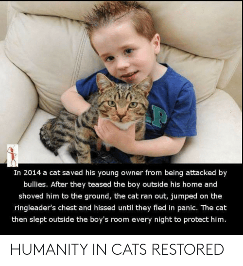 Jumped: In 2014 a cat saved his young owner from being attacked by  bullies. After they teased the boy outside his home and  shoved him to the ground, the cat ran out, jumped on the  ringleader's chest and hissed until they fled in panic. The cat  then slept outside the boy's room every night to protect him. HUMANITY IN CATS RESTORED