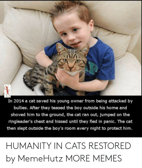Jumped: In 2014 a cat saved his young owner from being attacked by  bullies. After they teased the boy outside his home and  shoved him to the ground, the cat ran out, jumped on the  ringleader's chest and hissed until they fled in panic. The cat  then slept outside the boy's room every night to protect him. HUMANITY IN CATS RESTORED by MemeHutz MORE MEMES