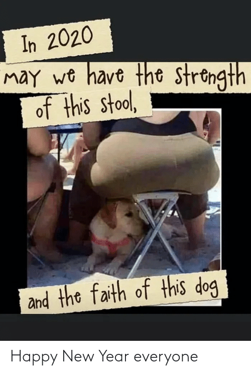 happy new year: In 2020  may wo have the strongth  of this stool,  and the faith of this dog Happy New Year everyone