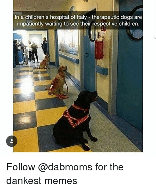 Dankest: In a children's hospital of Italy therapeutic dogs are  impatiently waiting to see their respective children. Follow @dabmoms for the dankest memes