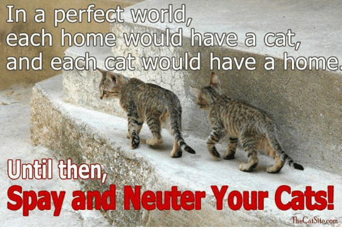 neuter: In a perfect world  each home would have a cat  and each CaC would have a home  Until  Spay and Neuter Your Cats!