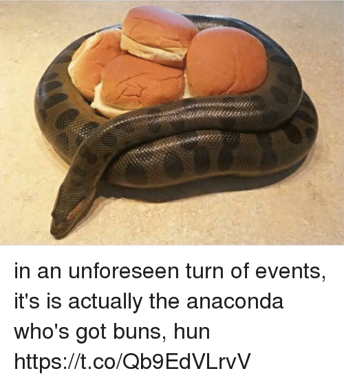 Anaconda, Girl Memes, and Got: in an unforeseen turn of events, it's is actually the anaconda who's got buns, hun https://t.co/Qb9EdVLrvV