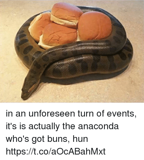 Anaconda, Girl Memes, and Got: in an unforeseen turn of events, it's is actually the anaconda who's got buns, hun https://t.co/aOcABahMxt