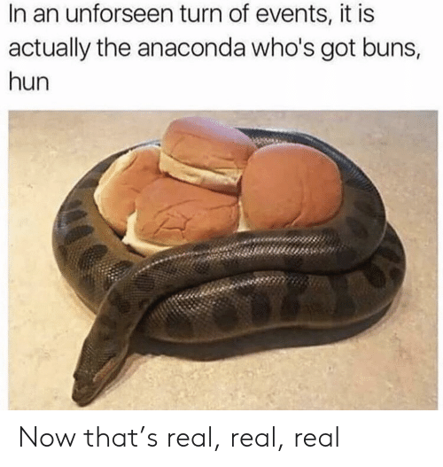 buns: In an unforseen turn of events, it is  actually the anaconda who's got buns,  hun Now that's real, real, real
