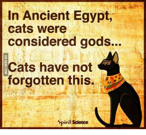 Spirit Science: In Ancient Egypt,  cats were  considered gods...  Cats have not  orgotten this.  Spirit Science