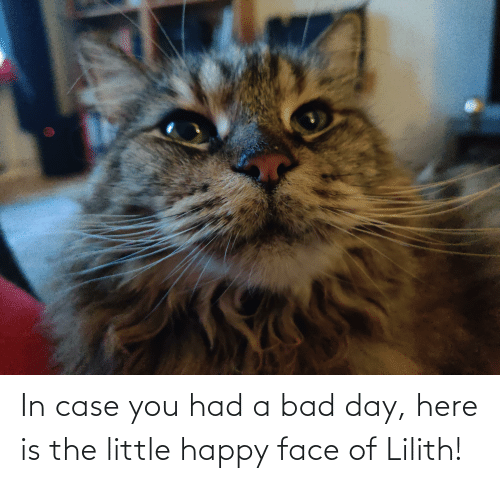 happy face: In case you had a bad day, here is the little happy face of Lilith!