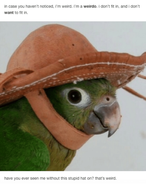 Weird, Fit, and Case: in case you haven't noticed, i'm weird. 'm a weirdo. i don't fit in, and i don't  want to fit in.  have you ever seen me without this stupid hat on? that's weird.