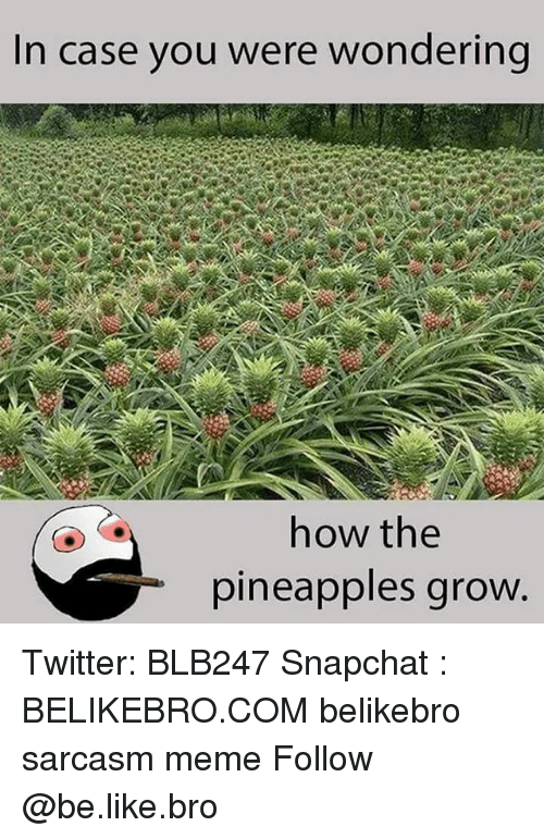 Be Like, Meme, and Memes: In case you were wondering  how the  pineapples groW Twitter: BLB247 Snapchat : BELIKEBRO.COM belikebro sarcasm meme Follow @be.like.bro
