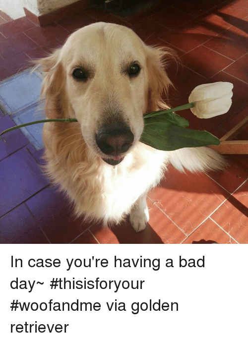 Bad, Bad Day, and Memes: In case you're having a bad day~ #thisisforyour #woofandme via golden retriever