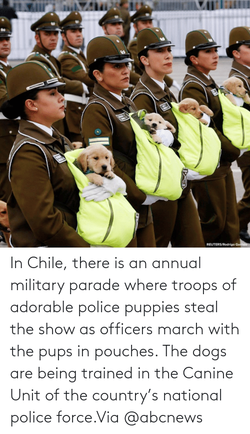 Dogs: In Chile, there is an annual military parade where troops of adorable police puppies steal the show as officers march with the pups in pouches. The dogs are being trained in the Canine Unit of the country's national police force.Via @abcnews