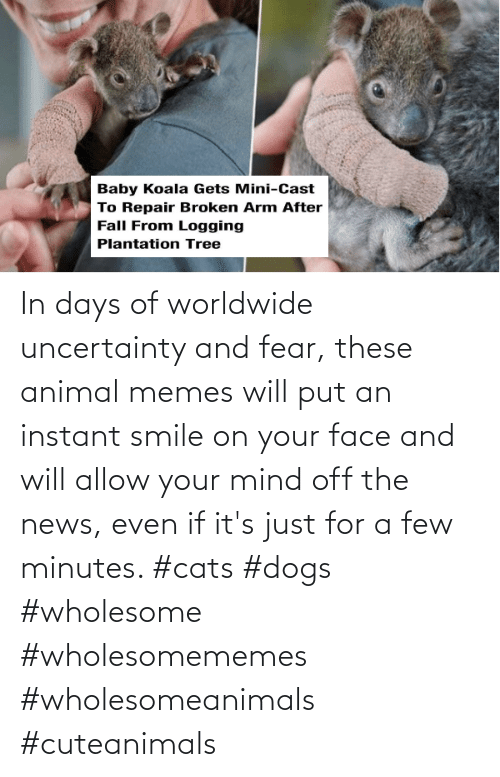 News: In days of worldwide uncertainty and fear, these animal memes will put an instant smile on your face and will allow your mind off the news, even if it's just for a few minutes. #cats #dogs #wholesome #wholesomememes #wholesomeanimals #cuteanimals