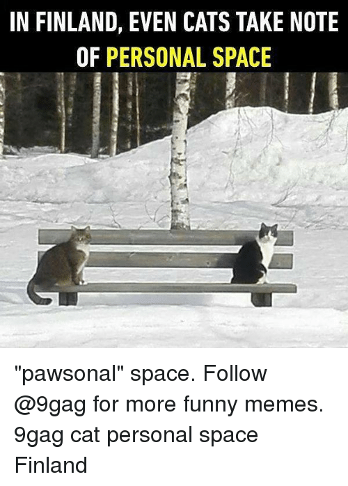 "9gag, Cats, and Funny: IN FINLAND, EVEN CATS TAKE NOTE  OF PERSONAL SPACE ""pawsonal"" space. Follow @9gag for more funny memes. 9gag cat personal space Finland"