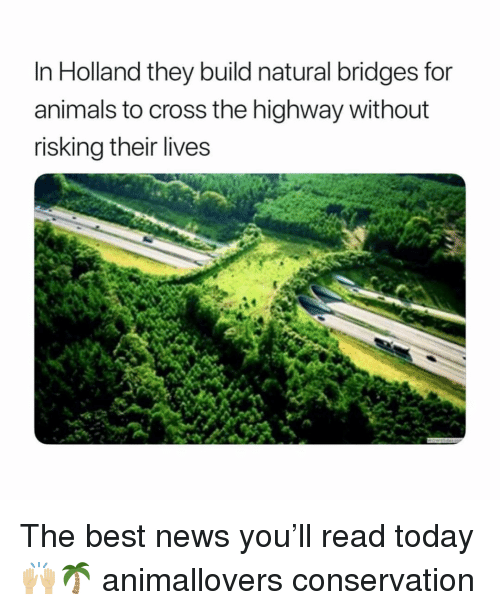 Animals, Memes, and News: In Holland they build natural bridges for  animals to cross the highway without  risking their lives The best news you'll read today 🙌🏼🌴 animallovers conservation