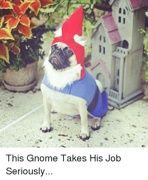 Memes, Jobs, and 🤖: in  j II This Gnome Takes His Job Seriously...