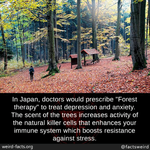 """Depression And Anxiety: In Japan, doctors would prescribe """"Forest  therapy"""" to treat depression and anxiety  The scent of the trees increases activity of  the natural killer cells that enhances vour  immune system which boosts resistance  against stress  weird-facts.org  @factsweird"""