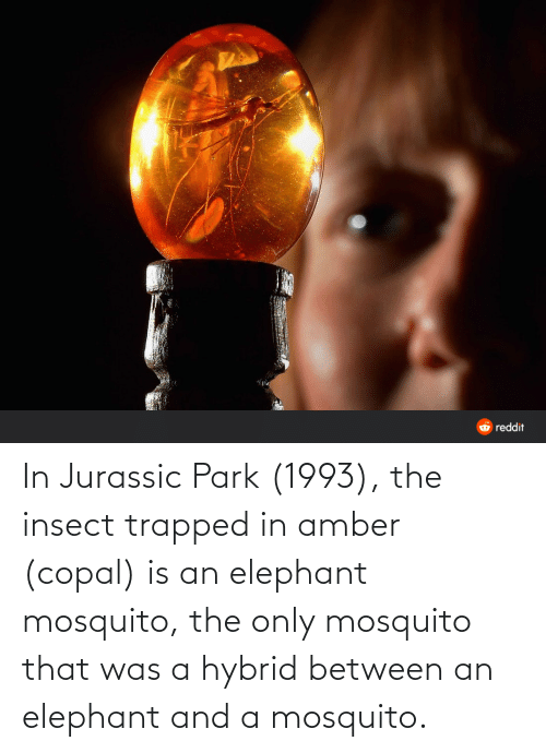 Jurassic Park: In Jurassic Park (1993), the insect trapped in amber (copal) is an elephant mosquito, the only mosquito that was a hybrid between an elephant and a mosquito.