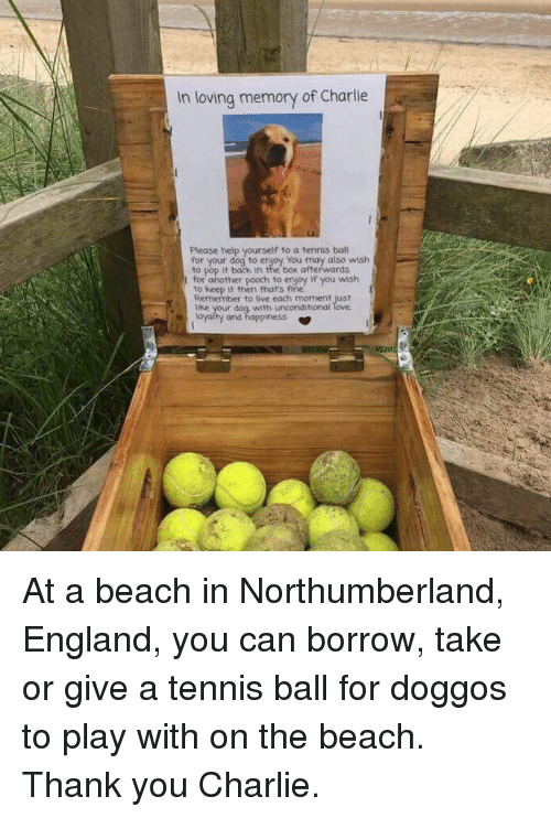tennis ball: In loving memory of Charlie  Please help yourself to a tennis ball  for your dog to enjoy You may also wish  to pop it back in the box afterwards  for another pooch to enjoy. If you wish  to keep it then thats fine  Remember to live each moment just  tike  with unconditional  and  ness At a beach in Northumberland, England, you can borrow, take or give a tennis ball for doggos to play with on the beach. Thank you Charlie.