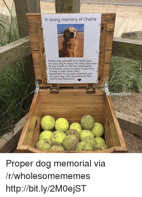 Memorial: In loving memory of Charlie  Please help yourself to a tennis bal  your dog to enjoy You may also wish  to pop it back in the box afterwards  for another pooch to erjoy If you wmsh  to Keep it then thars fine  Remember to live each moment just  e your dog with unconditional  oyalty and happiness *  omedySlam Proper dog memorial via /r/wholesomememes http://bit.ly/2M0ejST