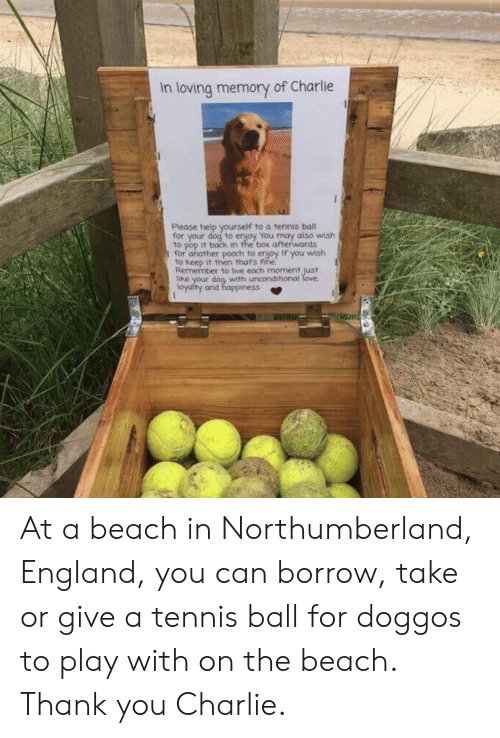 tennis ball: In loving memory of Charlie  Please help yourself to a tennis ball  for your dog to enjoy You may also wish  to pop it back in the box afterwards  I for another pooch to enjoy If you wish  to keep it then thats fine  Remember to live each moment just  with unconditional  loyalty and happiness At a beach in Northumberland, England, you can borrow, take or give a tennis ball for doggos to play with on the beach. Thank you Charlie.