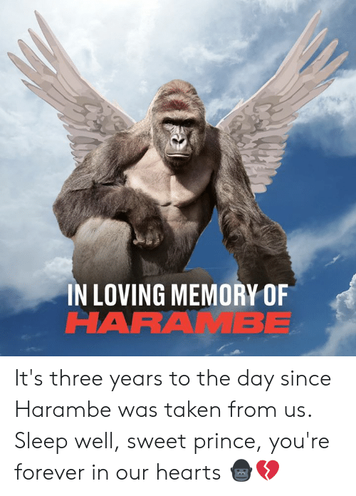 Harambe: IN LOVING MEMORY OF  HARAMBE It's three years to the day since Harambe was taken from us. Sleep well, sweet prince, you're forever in our hearts 🦍💔