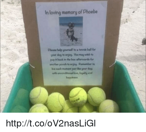 In Loving Memory of Phoebe Please Help Yourself Fo a ...