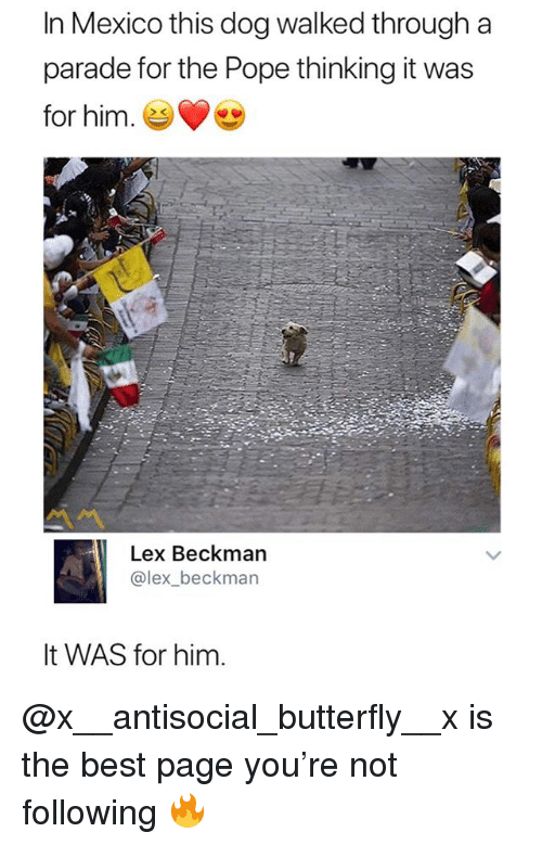 Pope Francis, Best, and Butterfly: In Mexico this dog walked through a  parade for the Pope thinking it was  for him. e  Lex Beckman  @lex_beckman  It WAS for him. @x__antisocial_butterfly__x is the best page you're not following 🔥