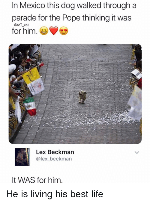 Life, Memes, and Pope Francis: In Mexico this dog walked through a  parade for the Pope thinking it was  for him. e  @will_ent  Lex Beckman  @lex_beckman  It WAS for him He is living his best life