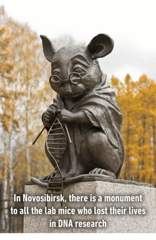 Memes and 🤖: In Novosibirsk, there is a monument  to all the lab mice who lost their lives  in DNA research