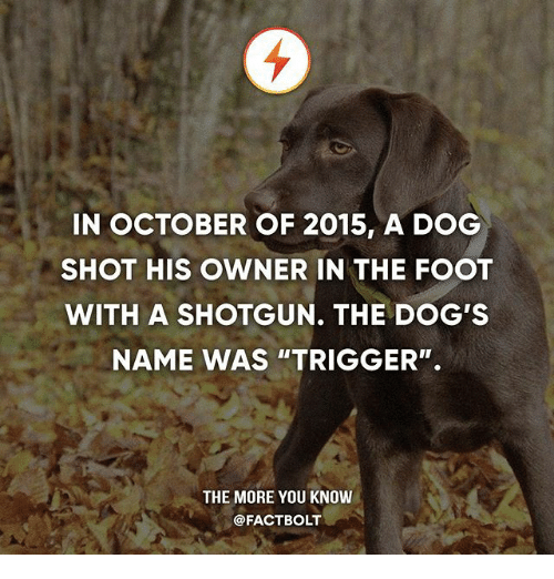 "Dogs, Memes, and The More You Know: IN OCTOBER OF 2015, A DOG  SHOT HIS OWNER IN THE FOOT  WITH A SHOTGUN. THE DOG'S  NAME WAS ""TRIGGER"".  THE MORE YOU KNOW  @FACTBOLT"