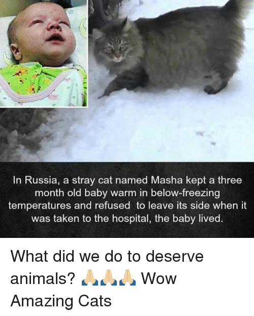 Animals, Cats, and Memes: In Russia, a stray cat named Masha kept a three  month old baby warm in below-freezing  temperatures and refused to leave its side when it  was taken to the hospital, the baby lived. What did we do to deserve animals? 🙏🏼🙏🏼🙏🏼  Wow Amazing Cats