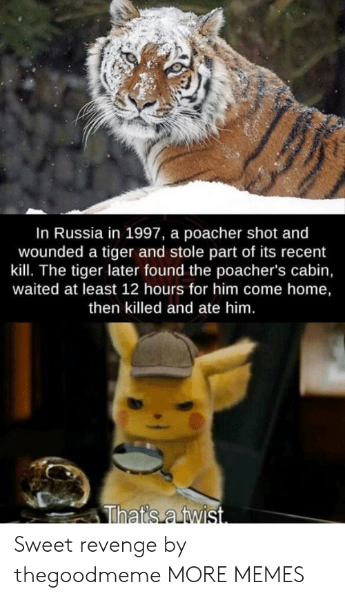 Sweet Revenge: In Russia in 1997, a poacher shot and  wounded a tiger and stole part of its recent  kill. The tiger later found the poacher's cabin,  waited at least 12 hours for him come home,  then killed and ate him.  That's a twist. Sweet revenge by thegoodmeme MORE MEMES