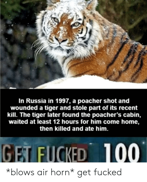 air horn: In Russia in 1997, a poacher shot and  wounded a tiger and stole part of its recent  kill. The tiger later found the poacher's cabin,  waited at least 12 hours for him come home,  then killed and ate him.  GET FUCKED  100 *blows air horn* get fucked